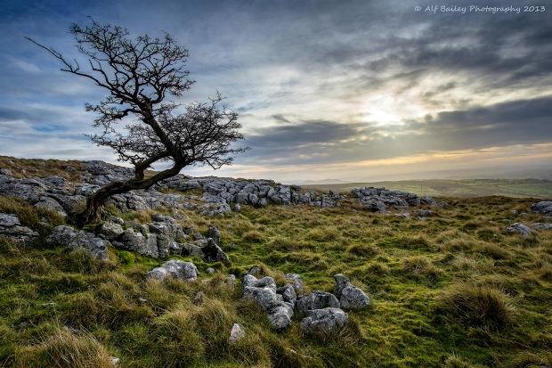 essays on wuthering heights themes Wuthering heights can be viewed as the struggle between civilized, conventional human behavior and its wild, anarchistic side put simply, the novel contrasts the good and evil in human nature i.